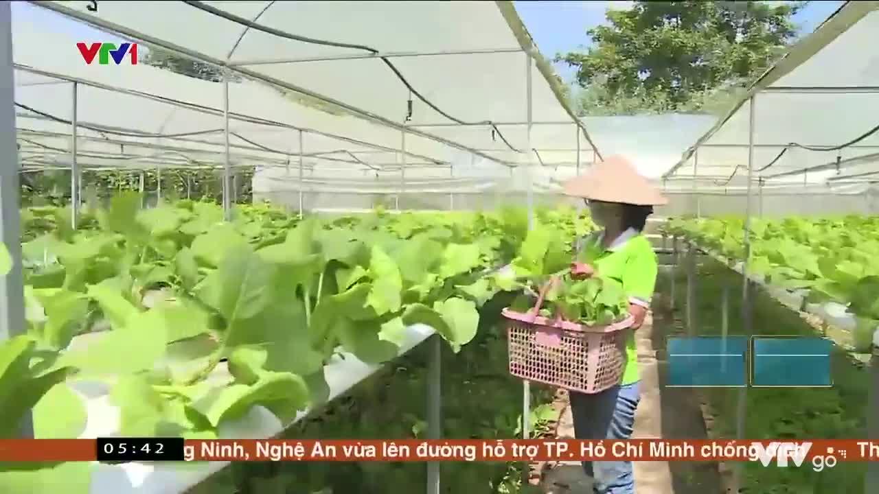 Nông trại cung ứng hàng loạt loại rau sạch |  Việt Nam thức giấc